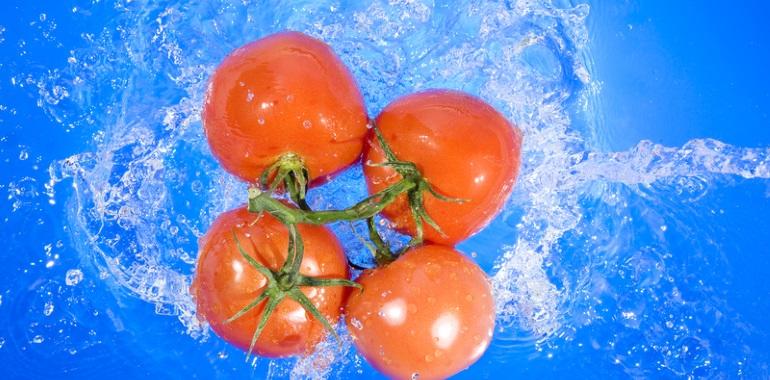 paradajky vo vode